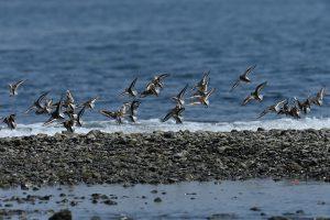 渚の野鳥達